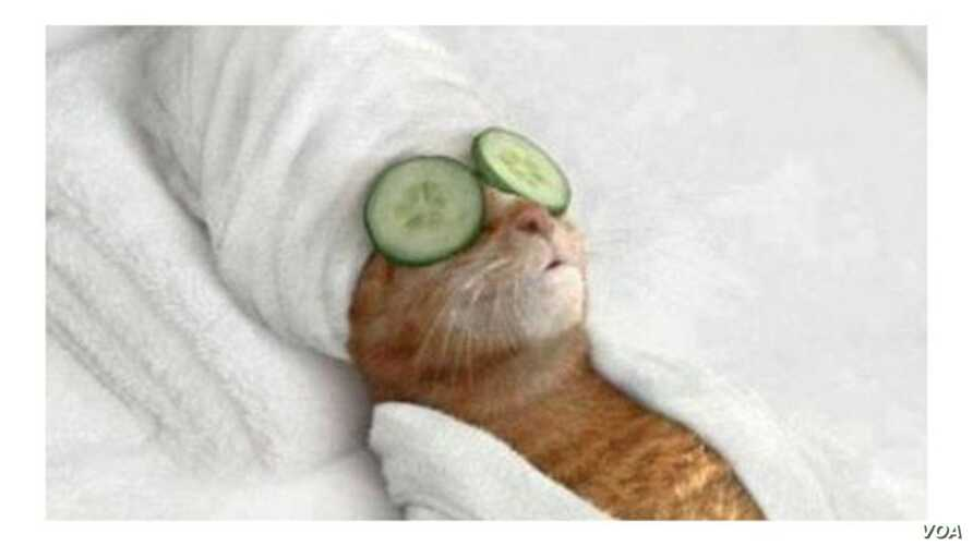 To deal with the stress of terrorist threats in Brussels, Belgium, social media users have posted cat pictures. The Verge website attributes this image to @exTimUpperClass.