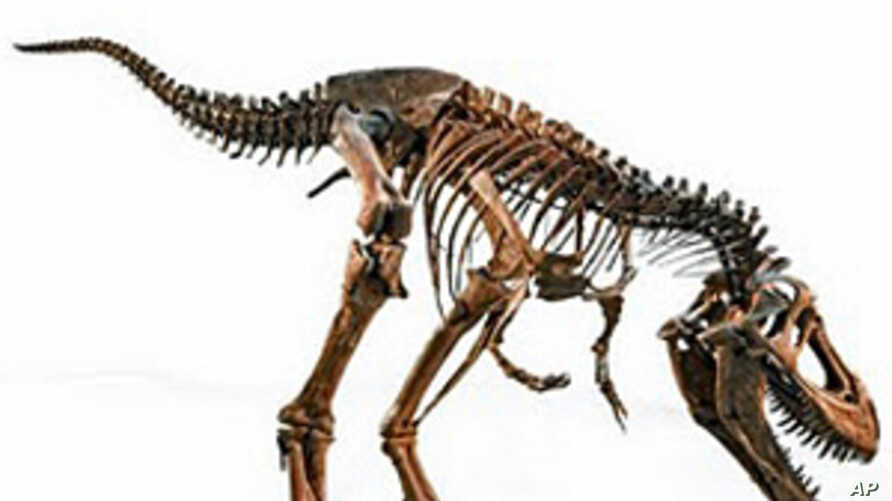 Exhibit Shows Rapid Growth, Social Nature of Dinosaurs