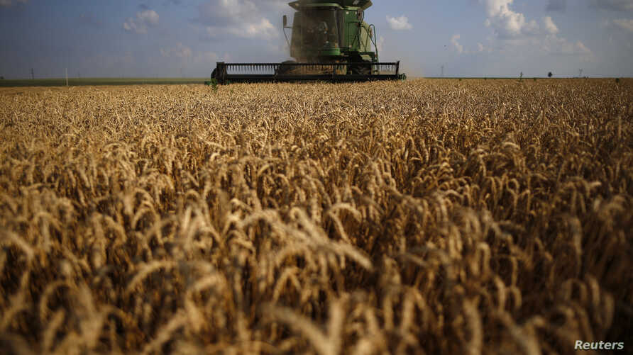 FILE - A combine drives through a field of soft red winter wheat during the harvest on a farm in Dixon, Illinois, July 16, 2013.