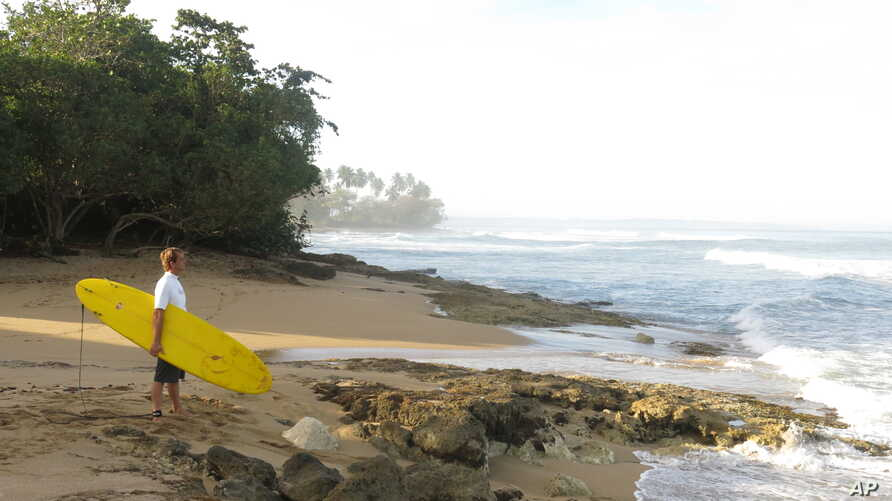 FILE - A surfer studies the waves at Wilderness Beach, in Aguadilla, a lush corner in northwest Puerto Rico.