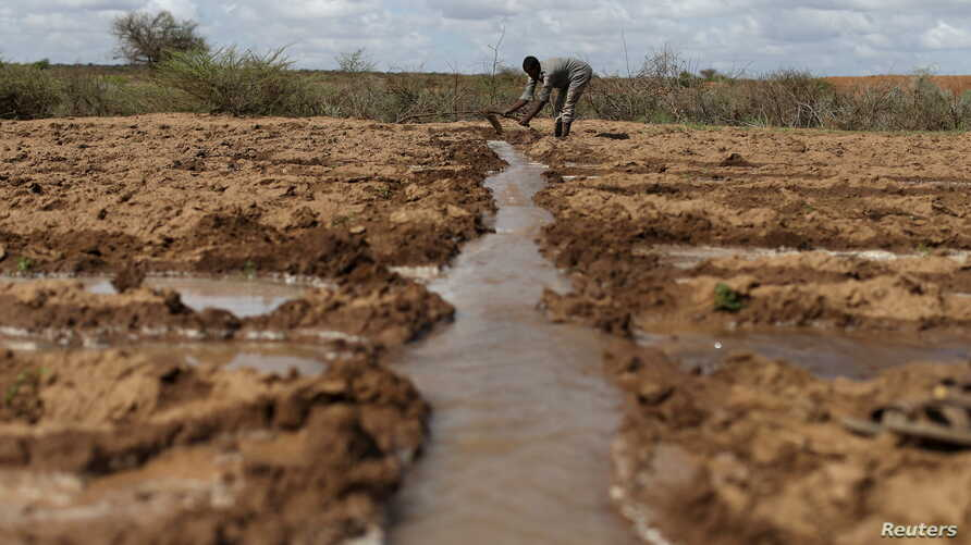 A farmer works in an irrigated field near the village of Botor, Somaliland, April 16, 2016. A severe El Nino-related drought hit in 2015 and 2016. A milder El Nino event is predicted to develop by February 2019.