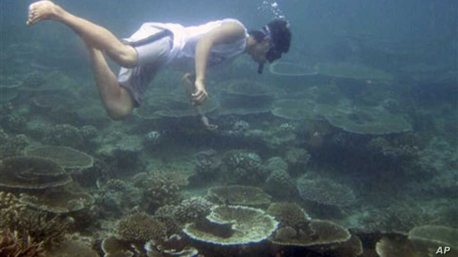 An environmental activist surveys coral reefs off Aceh Besar, Aceh province, Indonesia. Coral that survived the 2004 tsunami is now dying at one of the fastest rates ever recorded because of a dramatic rise in water temperatures off northwestern Indo