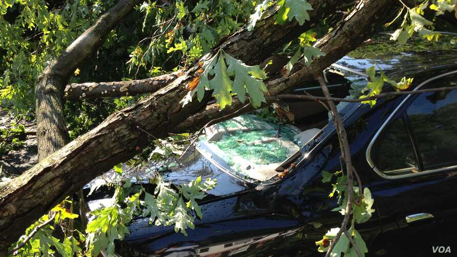 A car  hit by a tree in the storm, Bethesda, Maryland, July 1, 2012. (G. Conway/VOA)