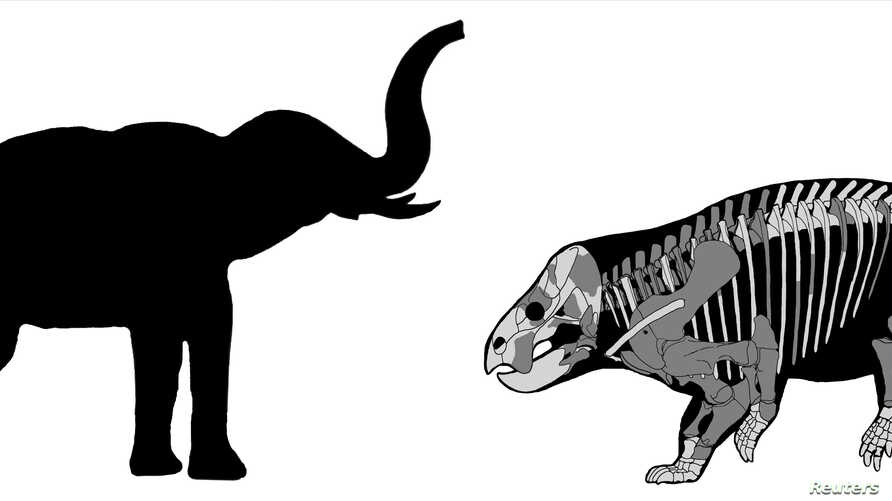 A comparison of the Lisowicia bojani with a recent elephant is pictured in this illustration handout, Nov. 21, 2018.