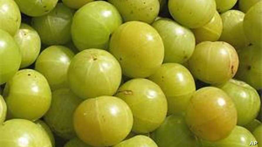 Indian Gooseberry Grows Profits for Farmers