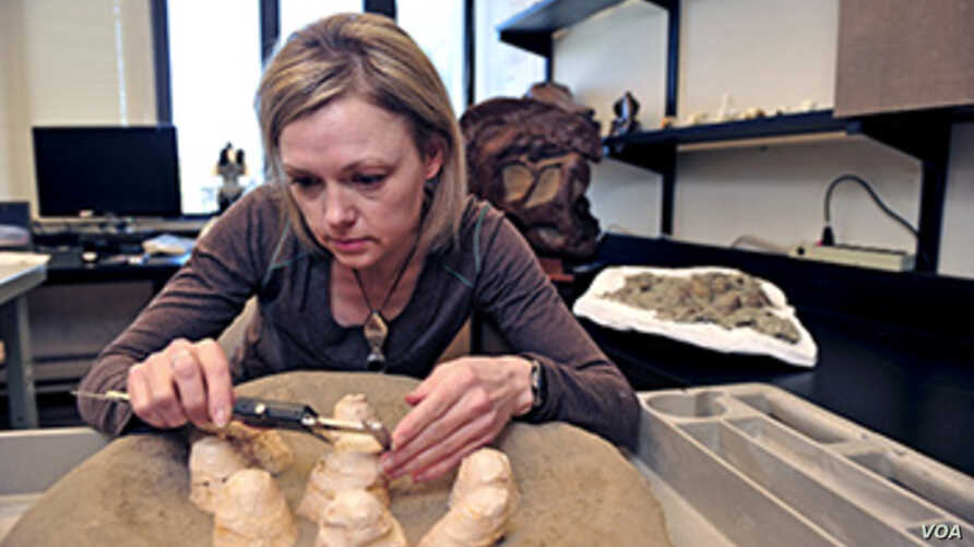Darla Zelenitsky, assistant professor in the Department of Geoscience at the University of Calgary, explored the unusual nesting habits of the small meat-eating Troodon dinosaur by studying the shells of fossil eggs. Photo by Jay Im