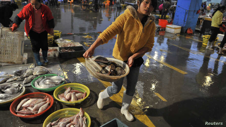 FILE - A vendor carries a basket of fresh fish at a seafood market in Quanzhou, Fujian province, China, Dec. 9, 2013.
