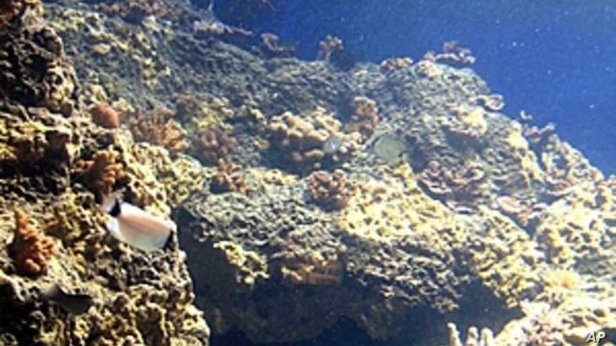 A new marine life exhibit is shown at the Waikiki Aquarium in Honolulu, Hawaii, August 9, 2011 (file photo)