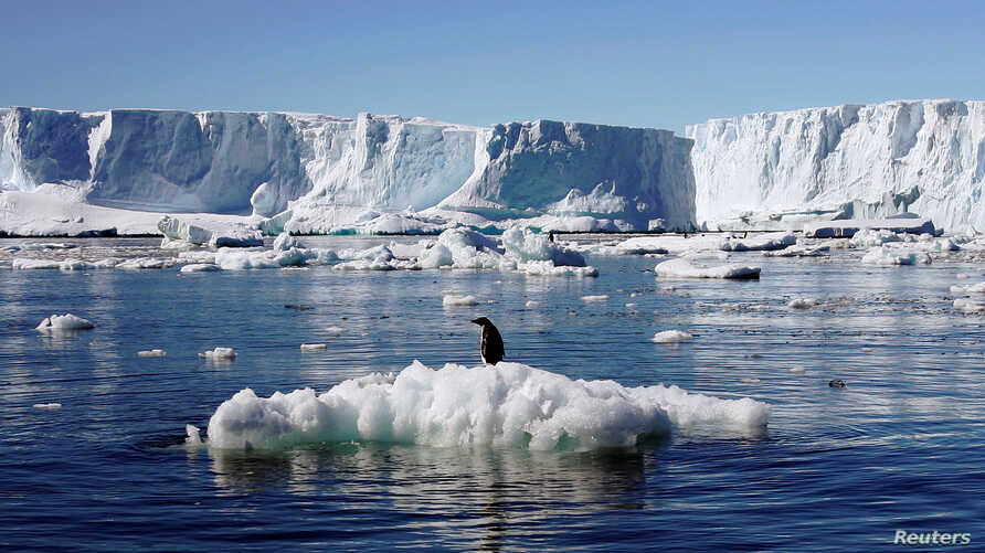 FILE - An Adelie penguin stands atop a block of melting ice near the French station at Dumont díUrville in East Antarctica.