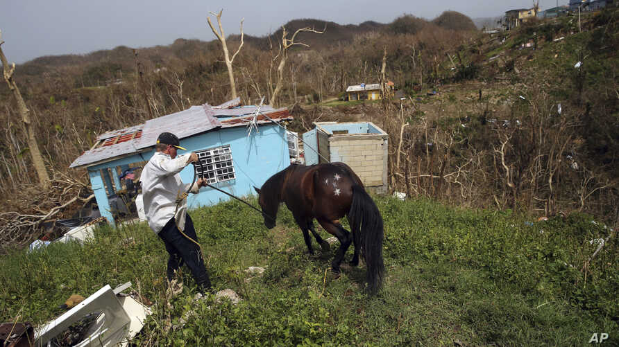 Jose Trinidad collects his horse, which survived Hurricane Maria, as he walks down to his destroyed home, in Montebello, Puerto Rico, in the aftermath of the hurricane, Sept. 26, 2017.