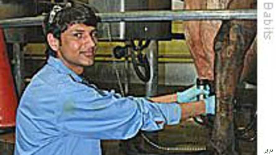 Refugee Workers Find Jobs in US Dairy Industry