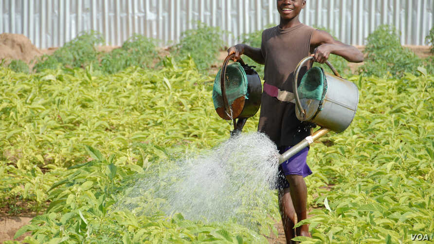 A boy in Benin waters food crops that are growing on land where agriculture previously failed. The water is pumped by means of solar power.(Courtesy SELF)