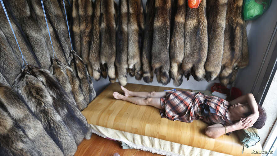A vendor sleeps inside her store next to walls lined with mink fur at a fur market in Chongfu township, Zhejiang province September 13, 2013.
