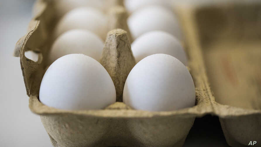 Eggs are kept fresh in a laboratory of the Chemical and Veterinary Investigation Office in Krefeld, Germany, Aug. 7, 2017. Dutch investigators detained two men Thursday who are suspected of being involved in the illegal use of pesticide at poultry fa