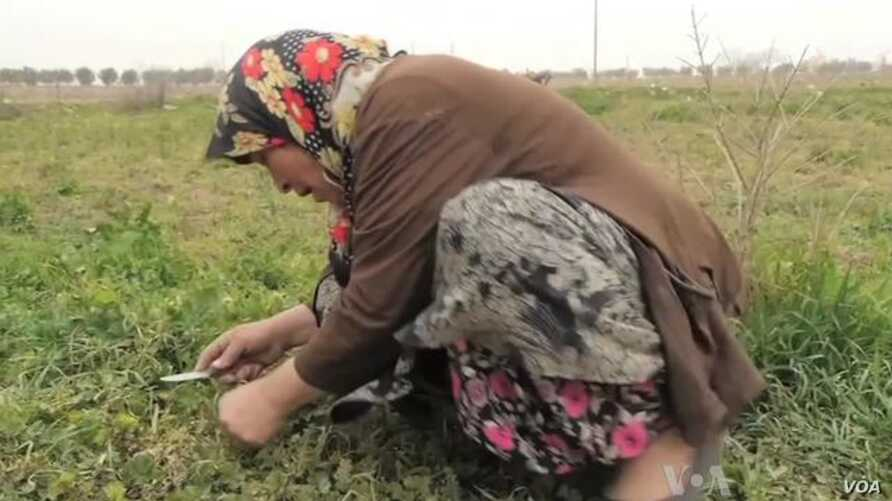 Undocumented Syrian Refugees Suffer Deprivation