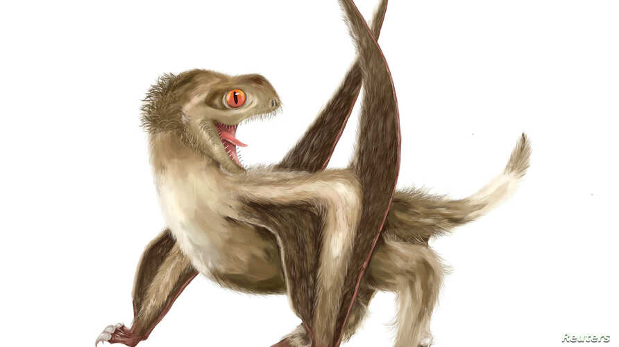 A Daohugou pterosaur, with four different feather types over its head, neck, body, and wings, and a generally ginger-brown color, based on Jurassic Period fossils unearthed in China, is seen in this  illustration handout, released from University of