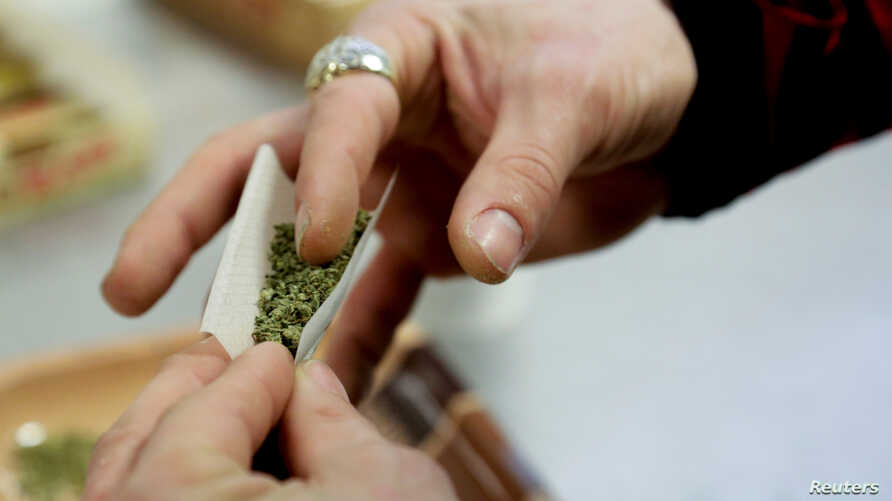 FILE - A participant practices rolling a joint at the Cannabis Carnivalus 4/20 event in Seattle, Washington,  April 20, 2014.