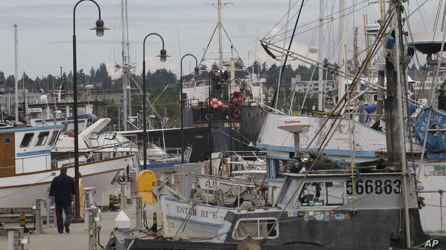 A man walks on a dock, Friday, July 2, 2010, at Fishermen's Terminal in Seattle