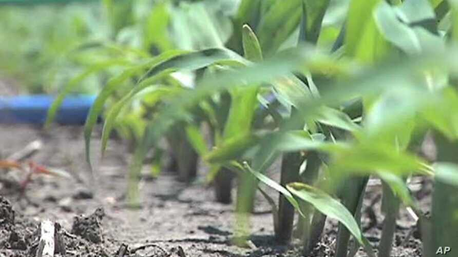 Outlook Positive for Farmers as Commodity Prices Remain High
