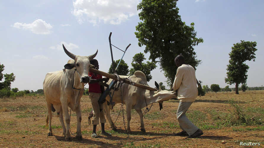 (File) A farm at Saulawa village, on the outskirts of Nigeria's north-central state of Kaduna, May 15, 2013.