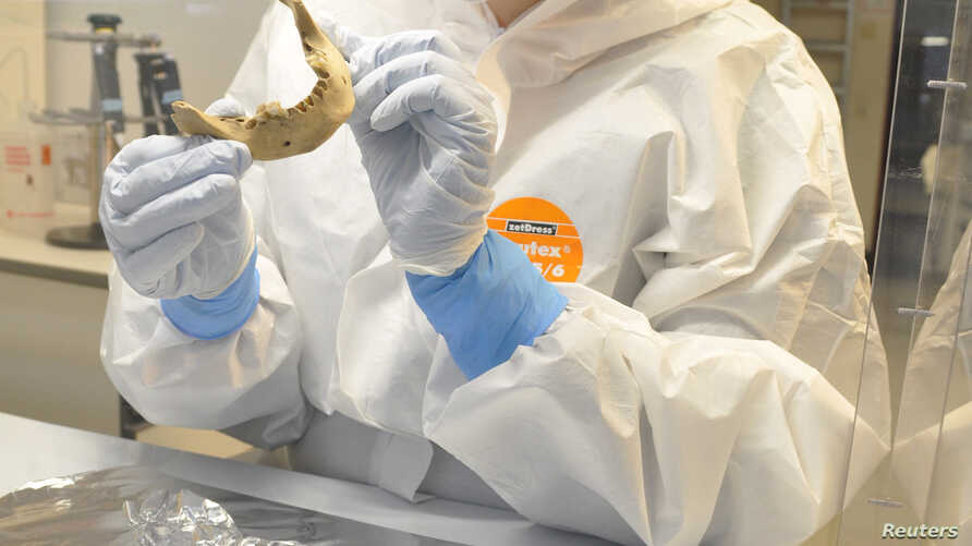 Scientist Verena Schuenemann is shown examining the lower jaw bone of an ancient Egyptian mummy at the Palaeogenetics Laboratory at the University of Tuebingen in Germany in this undated handout photograph, May 30, 2017.