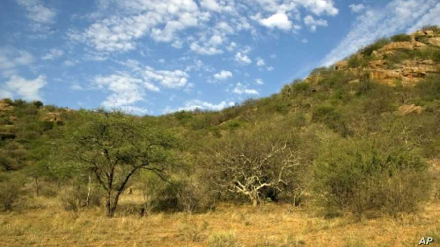 Plant diversity is key to a healthy ecosystem and a buffer against desertification in Samburu National Reserve, Kenya.