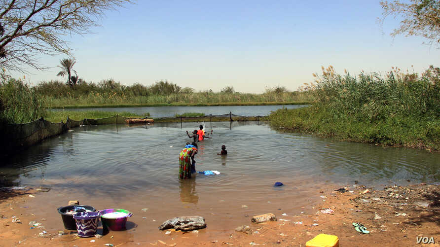 The re-introduction of indigenous prawns into this enclosed area in Lampsar village, in northern Senegal, is reducing the rate of schistosomiasis infections.  VOA/J. Lazuta
