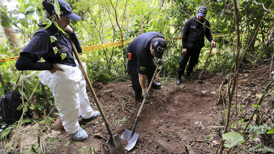 Members of the attorney general's forensic team dig for a supposed grave after handcuffed ex-rebels pointed out the location in a rural area close to Chaguani, Colombia, June 18, 2015.