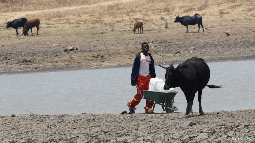 A youth fetches water from a dam near Mount Darwin, Zimbabwe, October 26, 2016.