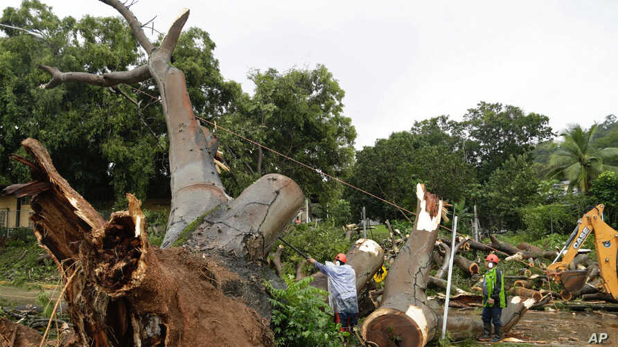 Workers cut a tree that fell and killed a boy outside a school in Panama City, Nov. 22, 2016. Civil defense officials in Panama say the country has already seen three deaths blamed on late-season Tropical Storm Otto.