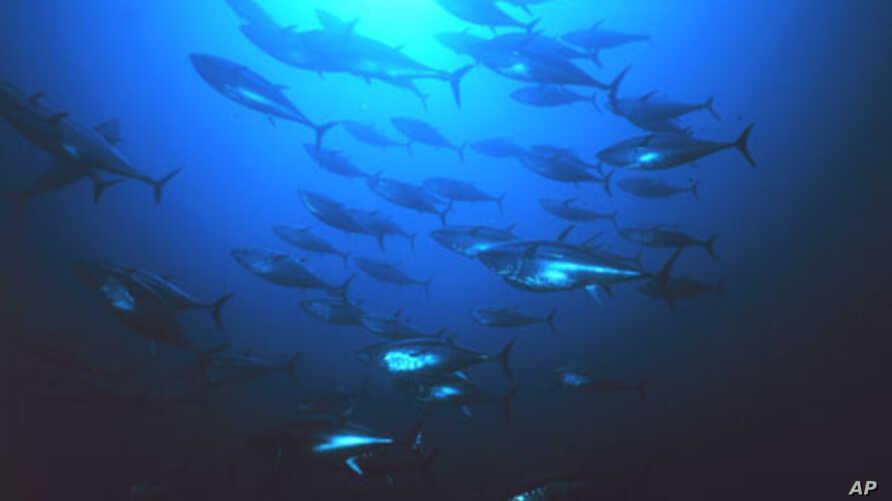 UN Blocks Ban on Bluefin Tuna Trade