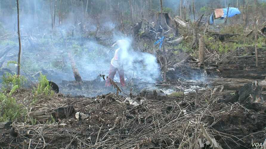 Slow Progress on Curbing Deforestation Expected at Climate Conference