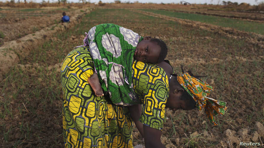 FILE - A woman, with a child on her back, in seen planting beans on a farm in Heremakono, Mali.