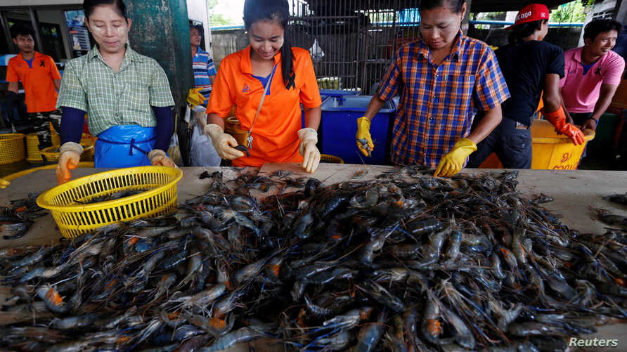 Myanmar migrant workers sort shrimp at a wholesale market for shrimp and other seafood in Mahachai, in Samut Sakhon province, Thailand, July 4, 2017.