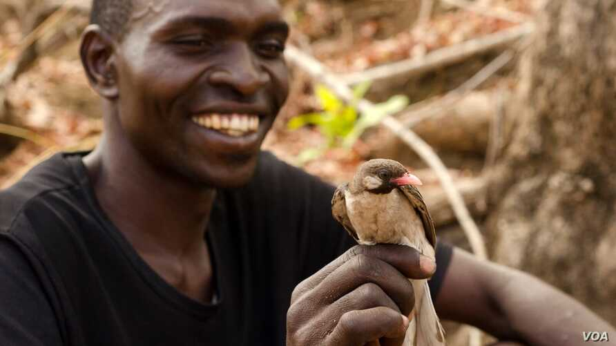 A Yao honey hunter holds a male Greater Honeyguide