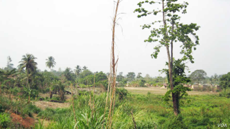 Degraded forest landscape in the Offinso District, Ghana. The original high forest cover has been modified through over-exploitation of wood resources, agriculture activities, and establishment of human settlements. (Photo by Ernest Foli, FORNESSA)