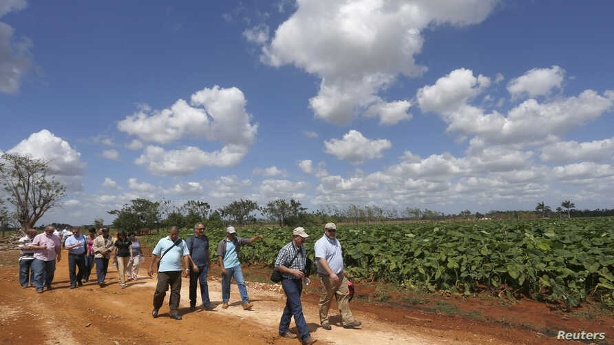 FILE - Members of the U.S. Agriculture Coalition for Cuba walk at a farm in Guira de Melena, Artemisa province March 3, 2015. Two former agriculture secretaries, a number of state agriculture officials and representatives of various state farm bureau