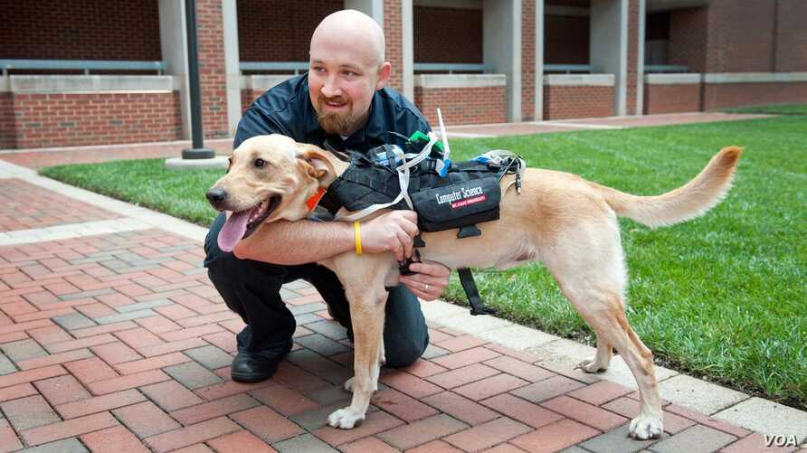 Researchers at North Carolina State University have developed a high-tech harness that is equipped with a suite of technologies to enhance communication between dogs and humans, with applications in everything from search and rescue to service dogs t