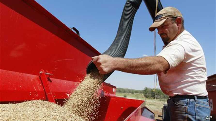 In this Sept. 2012 photo, John Honeywell directs a mixture of seed wheat and rye into a grain drill to plant winter wheat for cattle grazing near Orlando, Oklahoma.