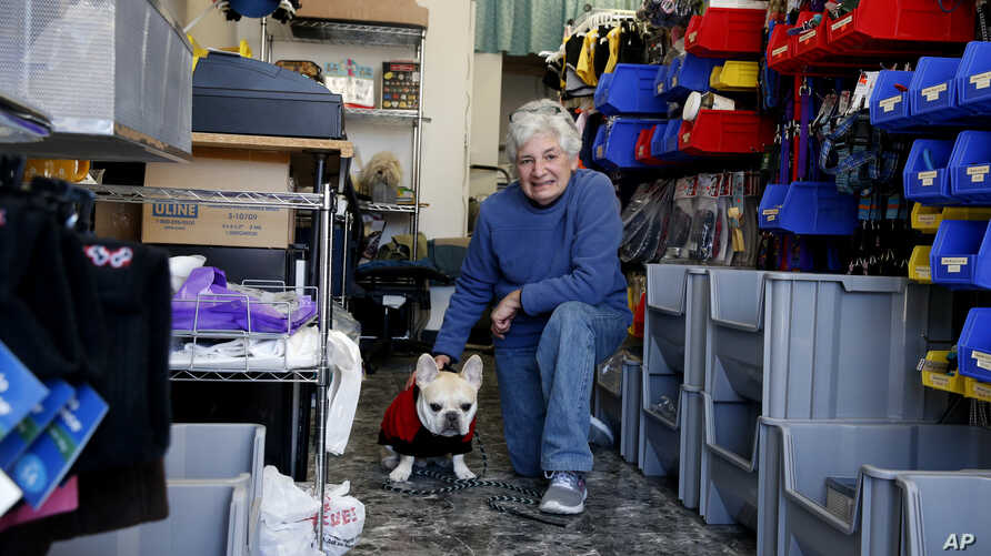 Hope Saidel, co-owner of Golly Gear, an accessories store for small dogs, and her dog, Teddy, pose at her store in Skokie, Ill.,  March 16, 2017. The Chicago area's temperate temperatures during the winter meant dog owners didn't need warm coats and