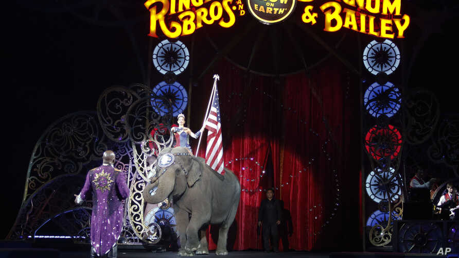 An Asian elephant performs during the national anthem for the final time in the Ringling Brothers and Barnum & Bailey Circus, May 1, 2016, in Providence, Rhode Island. The circus closes its own chapter on a controversial practice that has entertained
