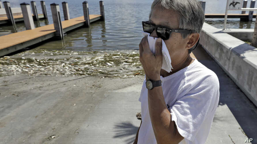 Alex Kuizon covers his face as he stands near dead fish at a boat ramp in Bradenton Beach, Florida, Aug. 6, 2018.