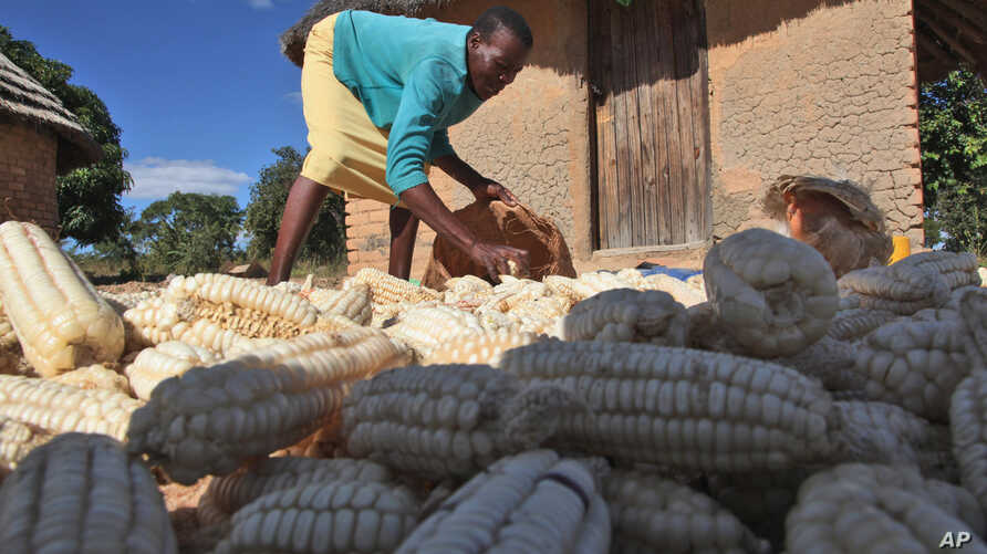 The U.N. Food and Agriculture Organization (FAO) says chronic hunger remains highest in sub-Saharan Africa, where one in four people are malnourished. (File photo)