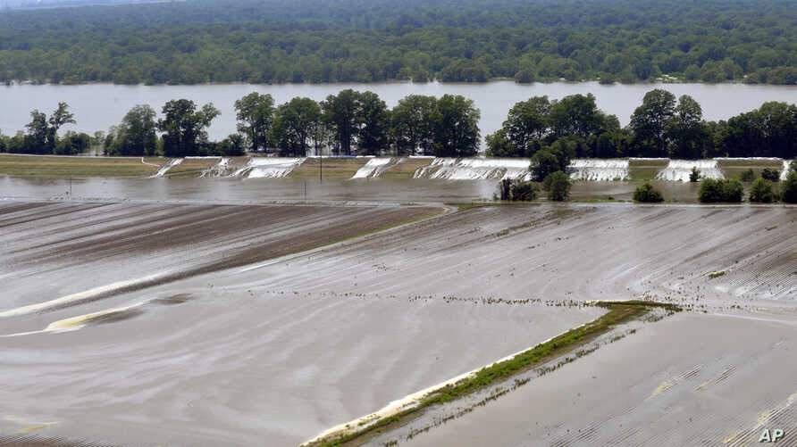 Crops and homes along the levee have started to flood, as the water starts topping over the broken levee in Lake Providence, La. on May 12, 2011.