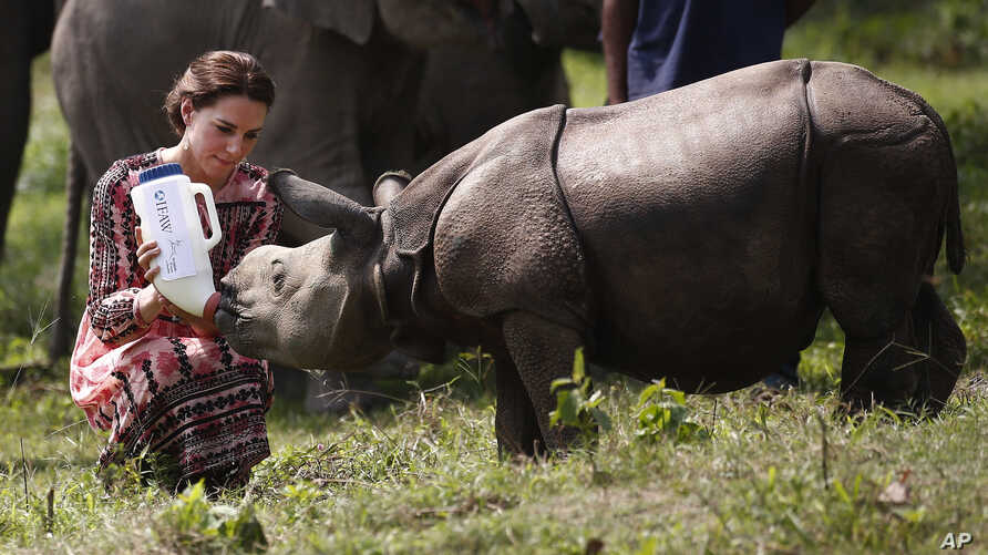 Britain's Kate, Duchess of Cambridge, feeds a baby rhino at the Centre for Wildlife Rehabilitation and Conservation (CWRC), at Panbari reserve forest in Kaziranga, in the north-eastern state of Assam, India, April 13, 2016.