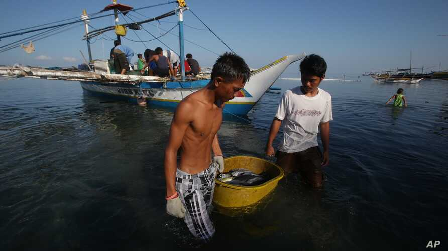 Filipino fishermen bring their fish to shore in the coastal town of Infanta, Pangasinan province, northwestern Philippines, May, 7, 2013.
