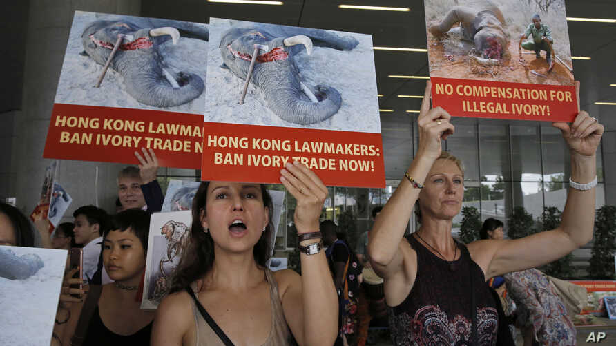 Animal conservation activists hold pictures of elephants being killed for their ivory tusks, outside the Legislative Council in Hong Kong, June 6, 2017.