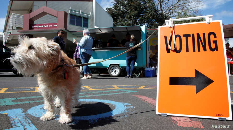 A dog, one of many, waits outside a polling station during the general election in Auckland, New Zealand, Sept. 23, 2017.