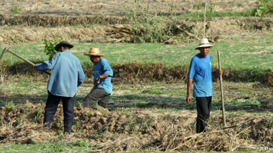 Farm workers in a field near the city of Udon Thani, a rural stronghold for anti-government protesters