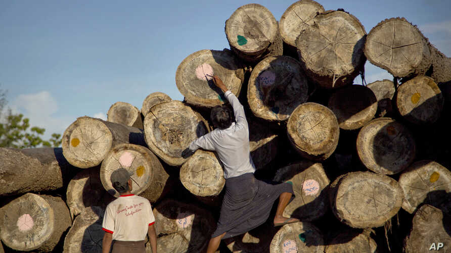 In this June 27, 2016, photo, a worker marks logs before transporting at a yard in Wuntho, northern Sagaing division, Myanmar. Myanmar is struggling to stop illegal logging that has erased one-quarter of the country's valuable forests in a generation